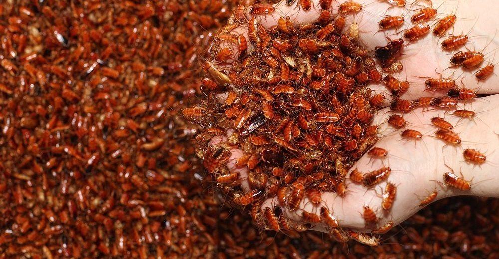 Травля насекомых и грызунов